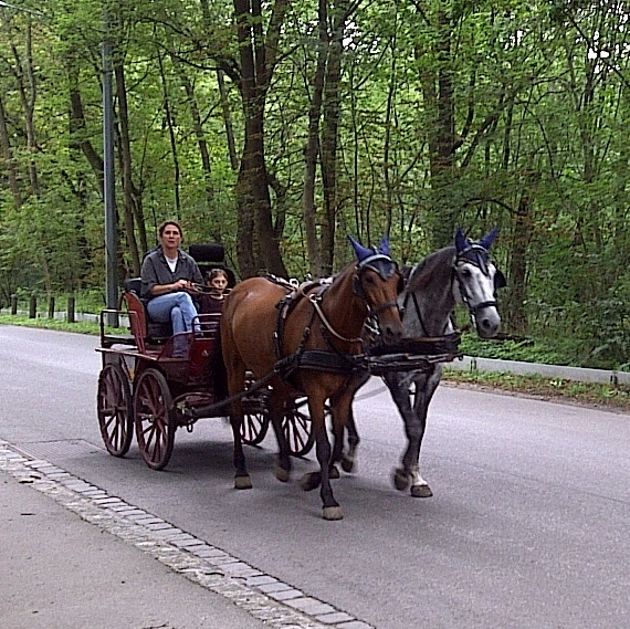 Horse and carriage in Prater