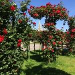 Red rose bush in Volksgarten in June